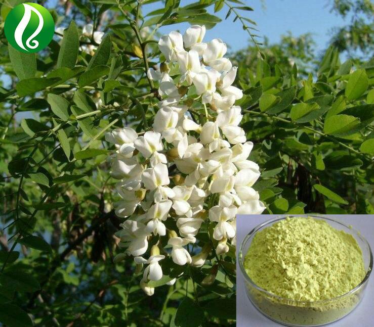 Sophora Japonica Feltre
