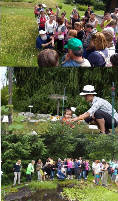 giardino-botanico-alpino-del-Cansiglio-scuola-di-Naturopatia